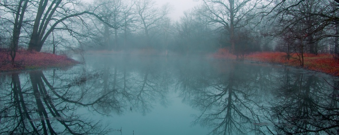 Early Autumn Morning. The cold air seats on top a lake. The tree branches, without leafs, are reflected on the calm water. Fog.